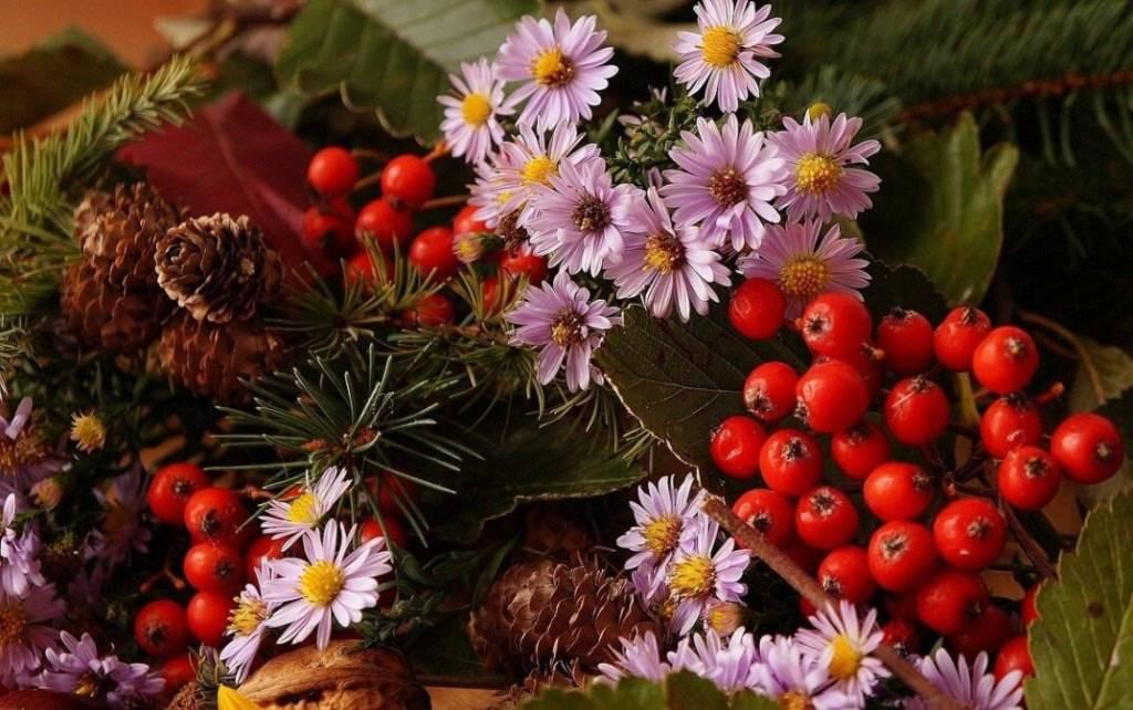 Jarzębina posiada wiele witamin i składników mineralnych
