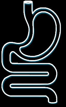 Żołądek
